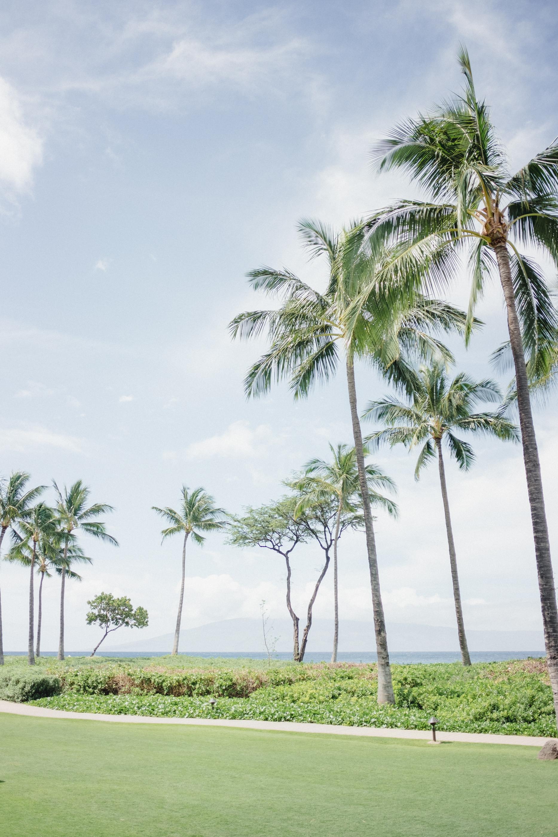Hawaii -6.jpg