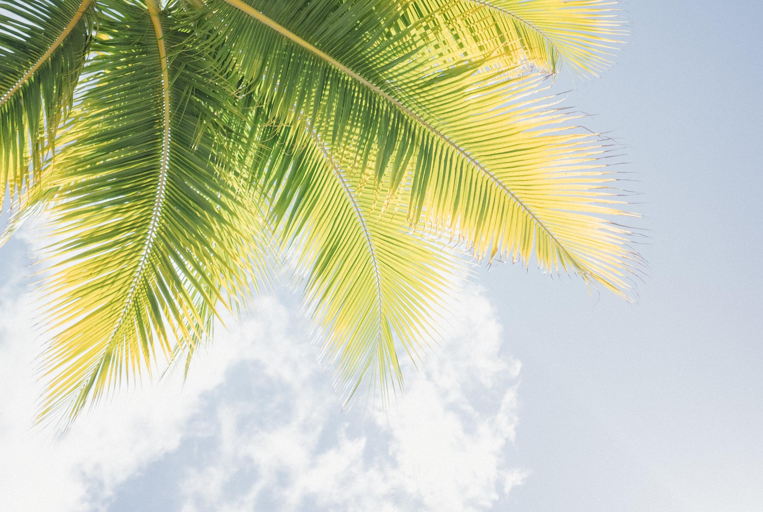 Hawaii -14.jpg