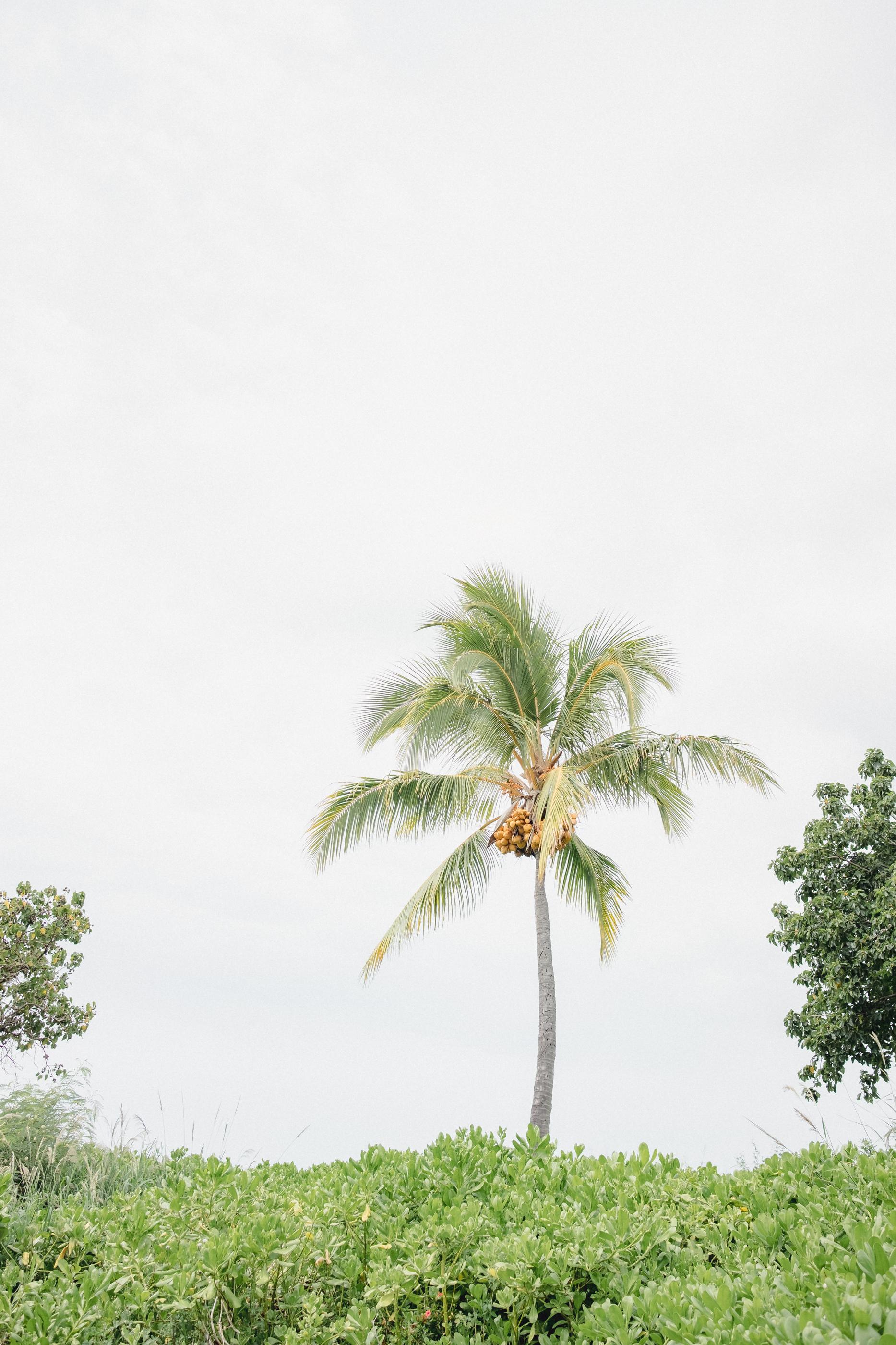 Hawaii -3.jpg