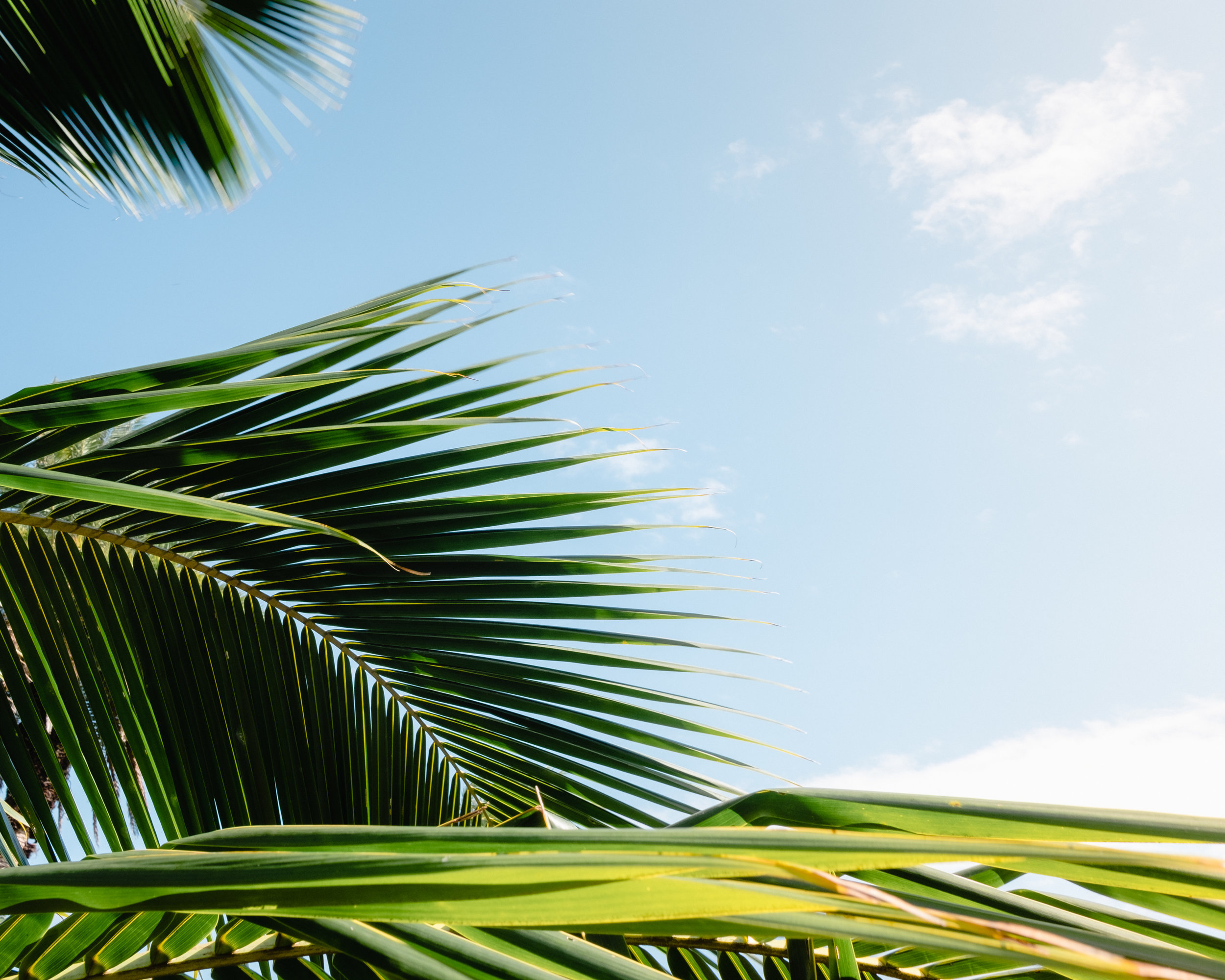 Hawaii -60.jpg