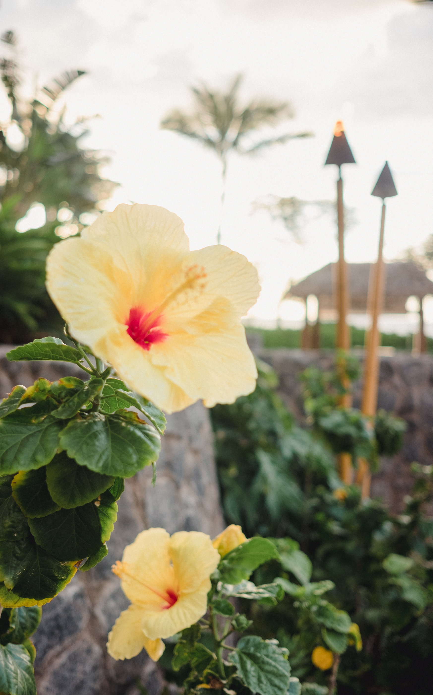Hawaii -7.jpg