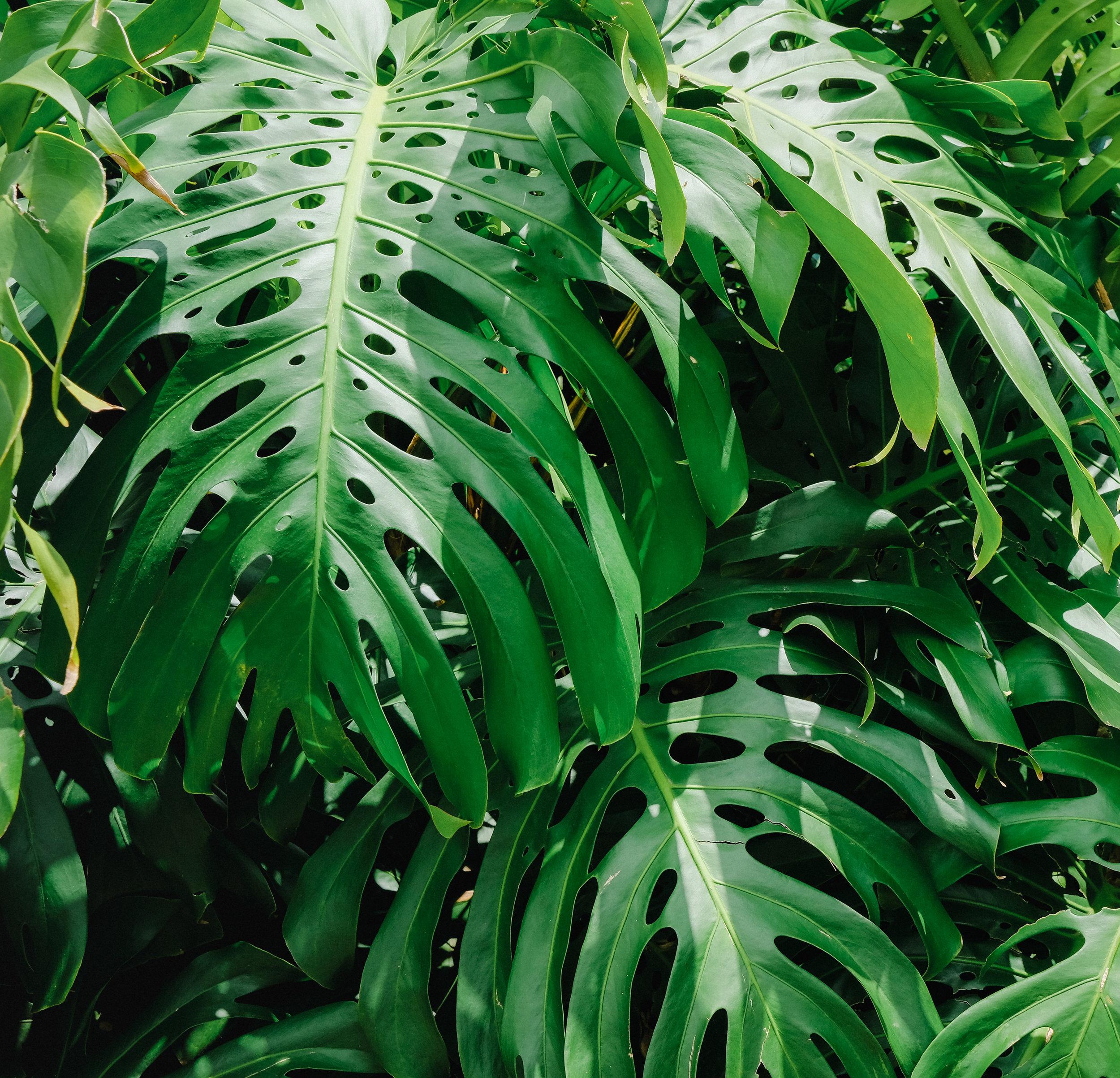 Hawaii -33.jpg