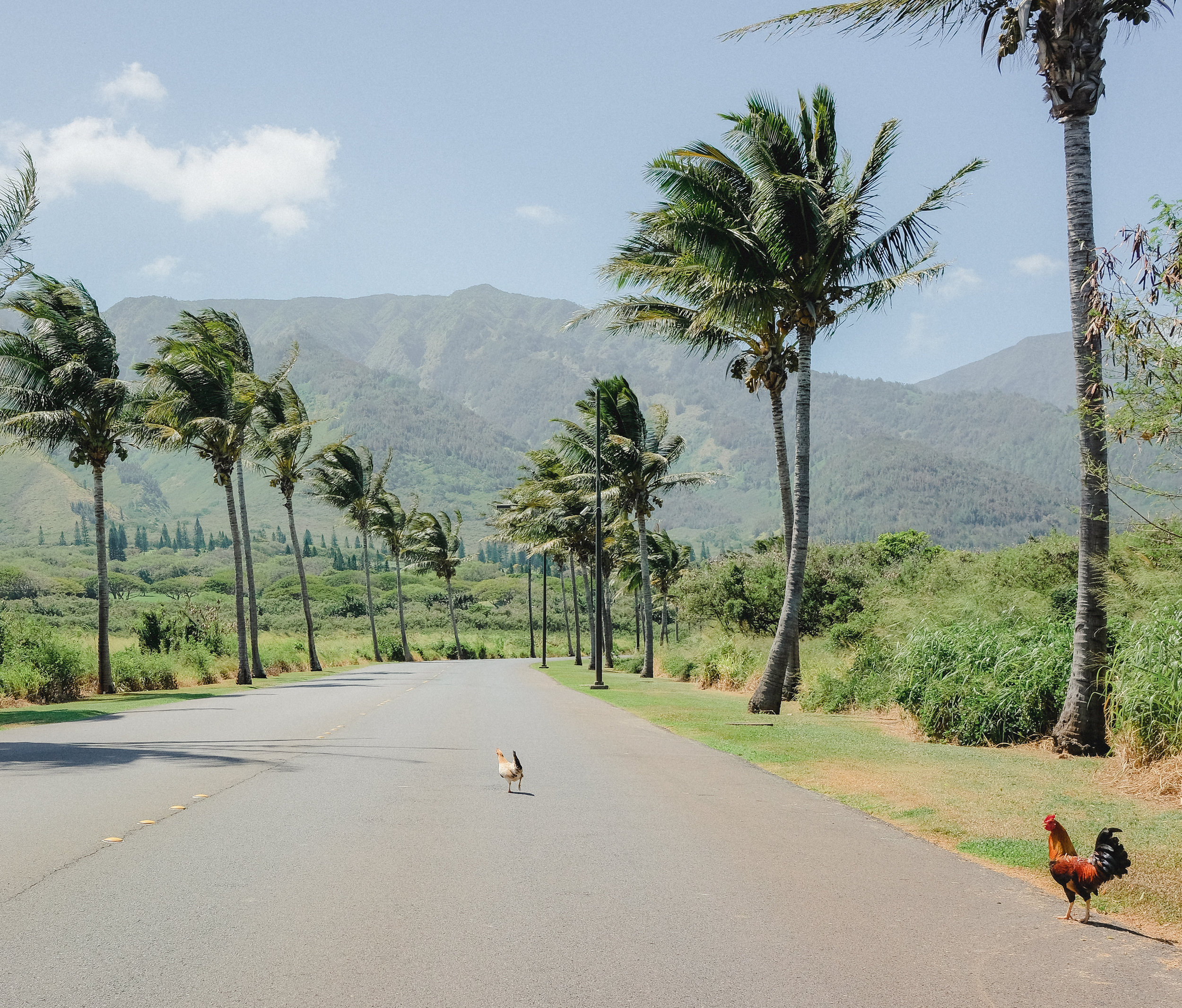 Hawaii -37.jpg