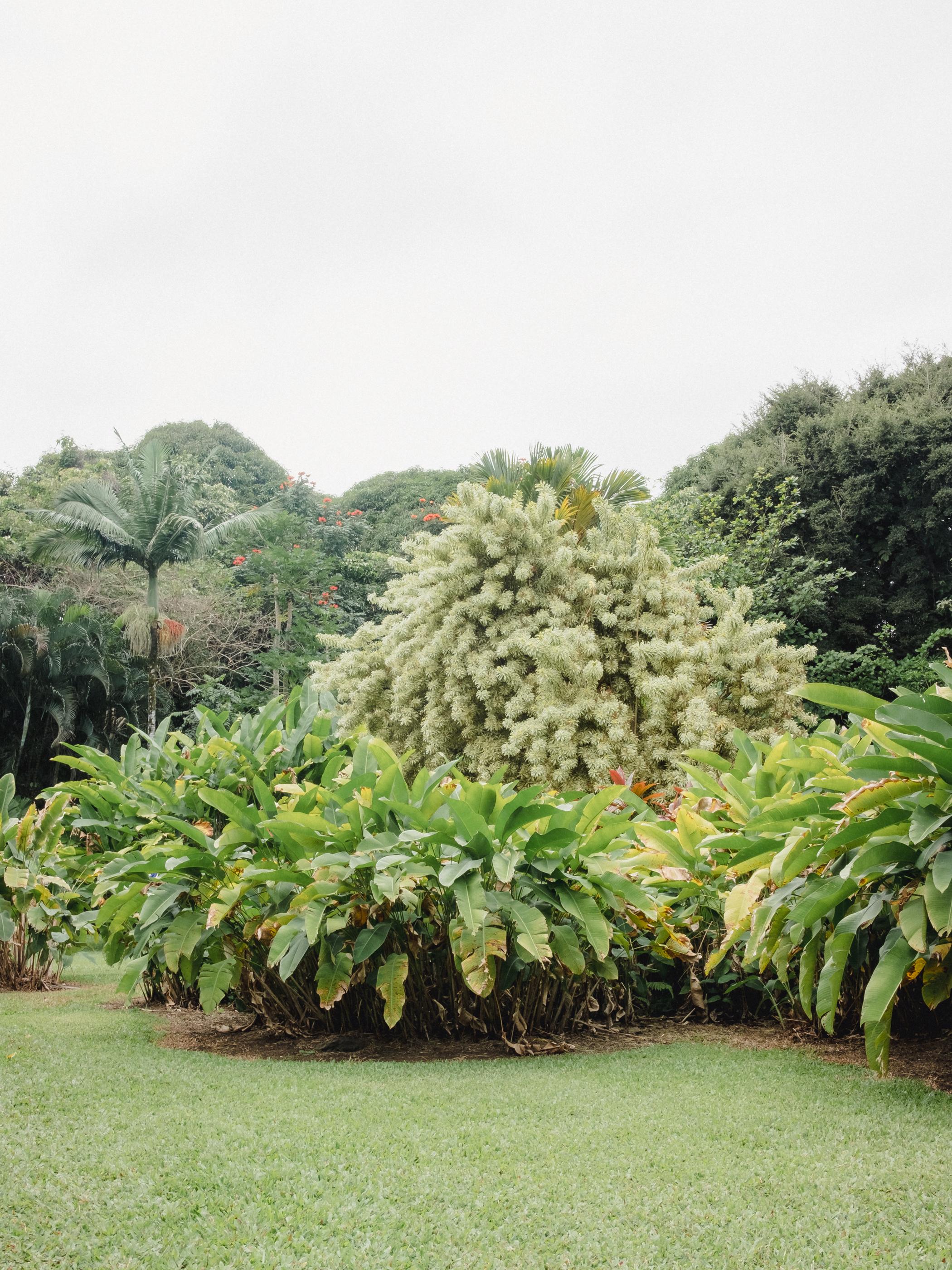 Hawaii -51.jpg