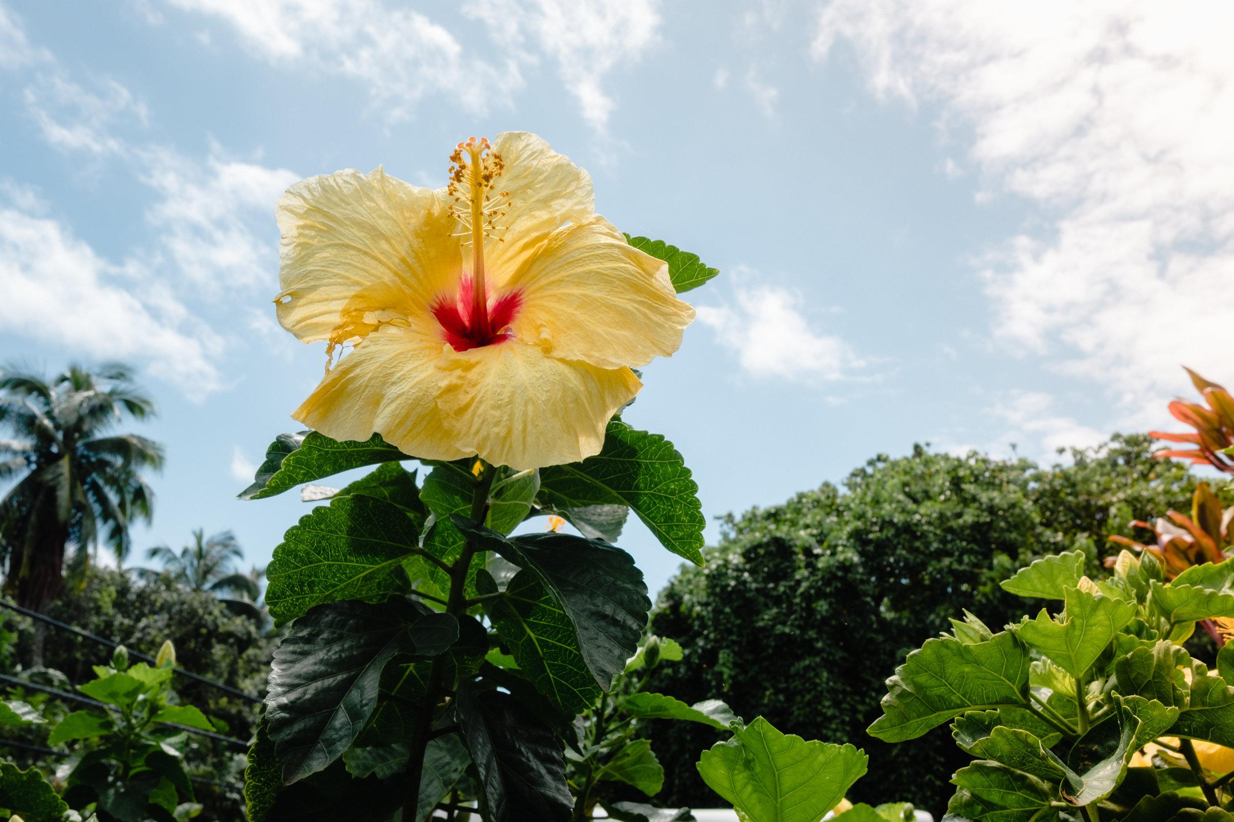 Hawaii -50.jpg