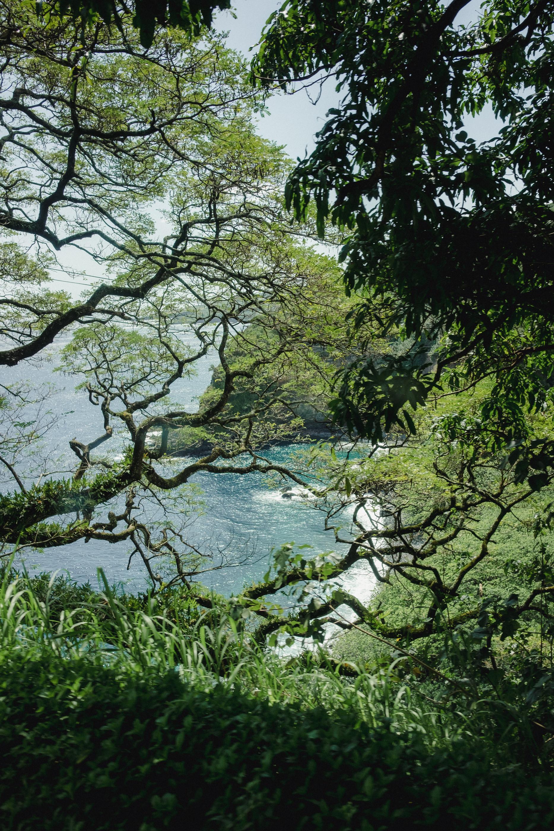 Hawaii -53.jpg