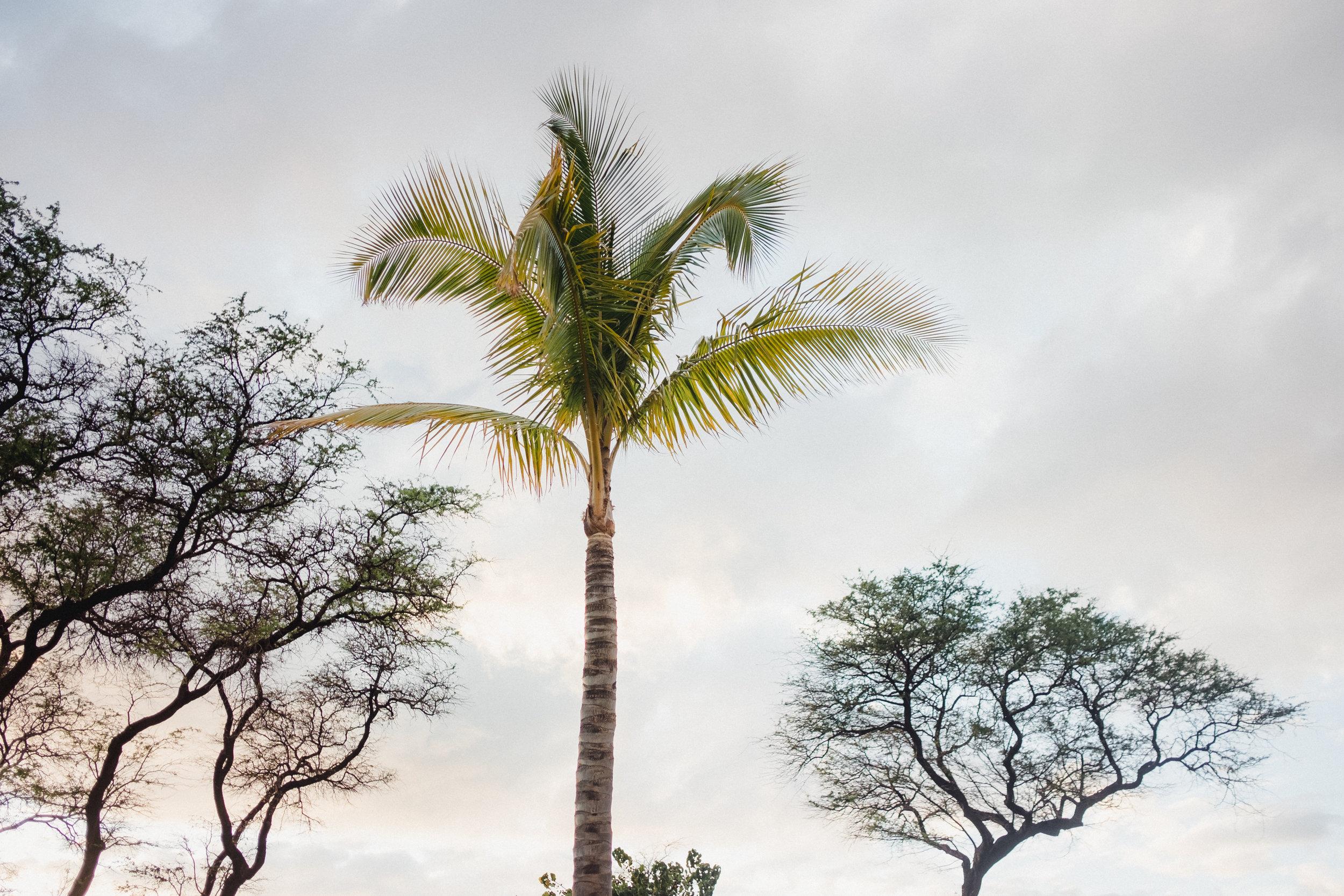 Hawaii -9.jpg