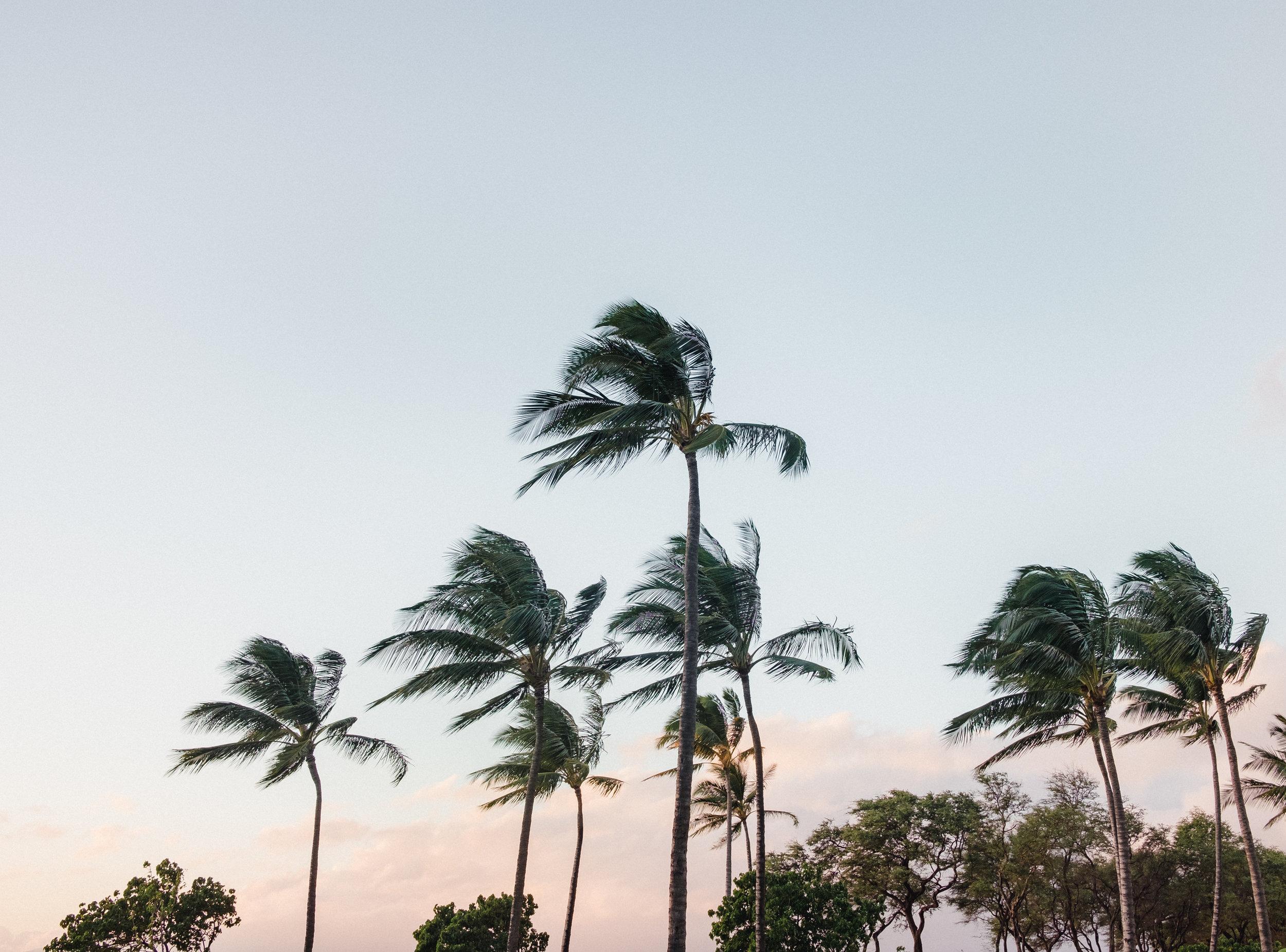 Hawaii -30.jpg