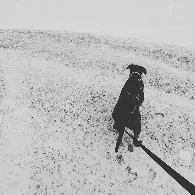 Turns out that my little Doggo likes the snow! #floridadog #snowdog