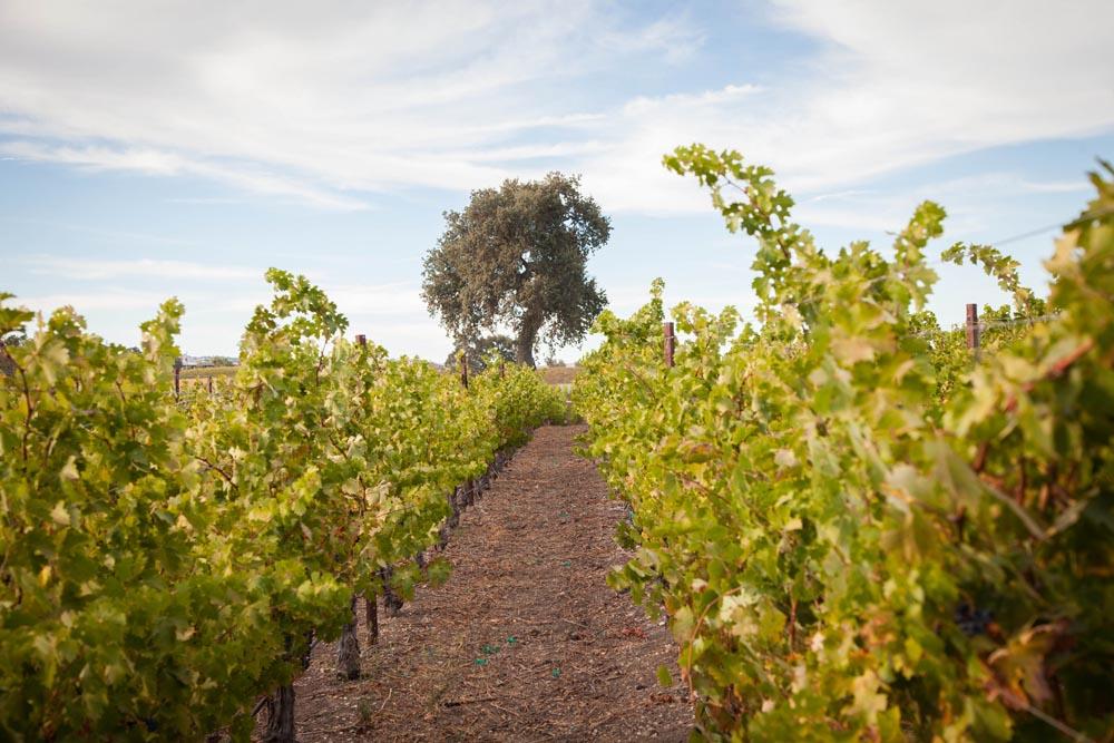 Summerwood Winery and Inn Wedding022.jpg