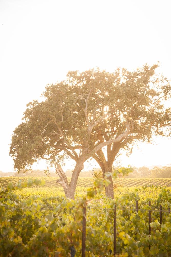 Summerwood Winery and Inn Wedding023.jpg