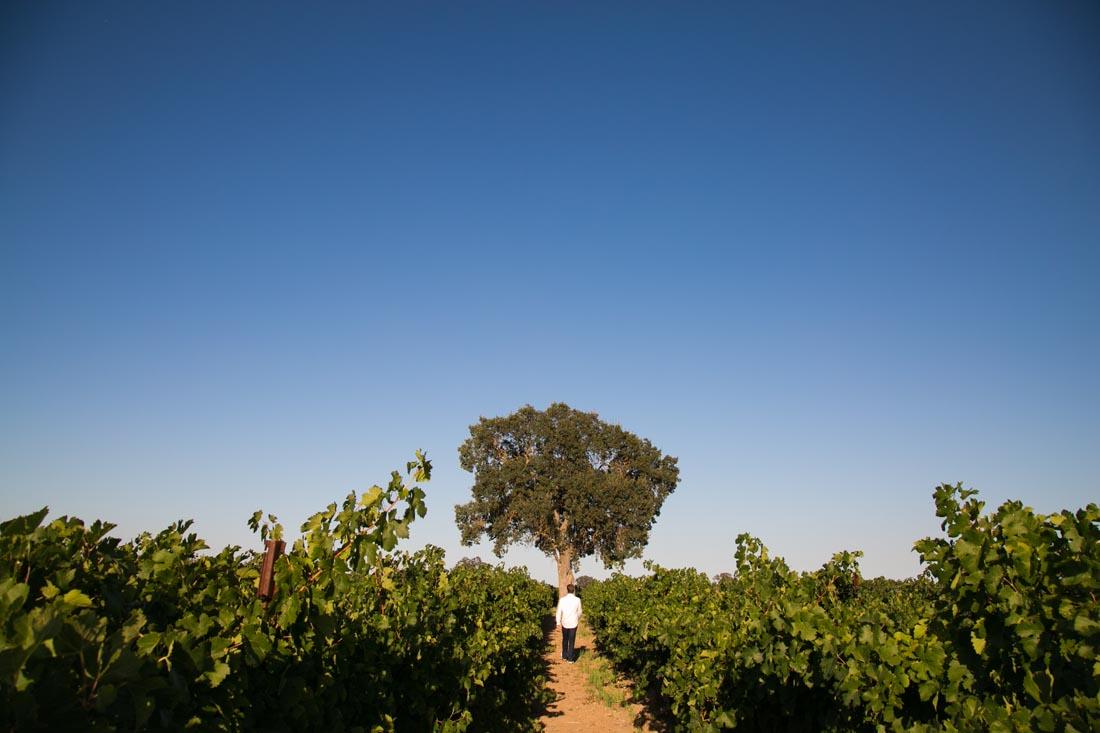 Le Vigne Winery Senior Portraits007.jpg