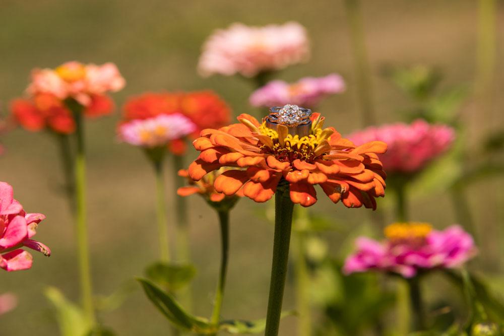 Cambria Wedding Photographer Stolo Family Vineyard  116.jpg
