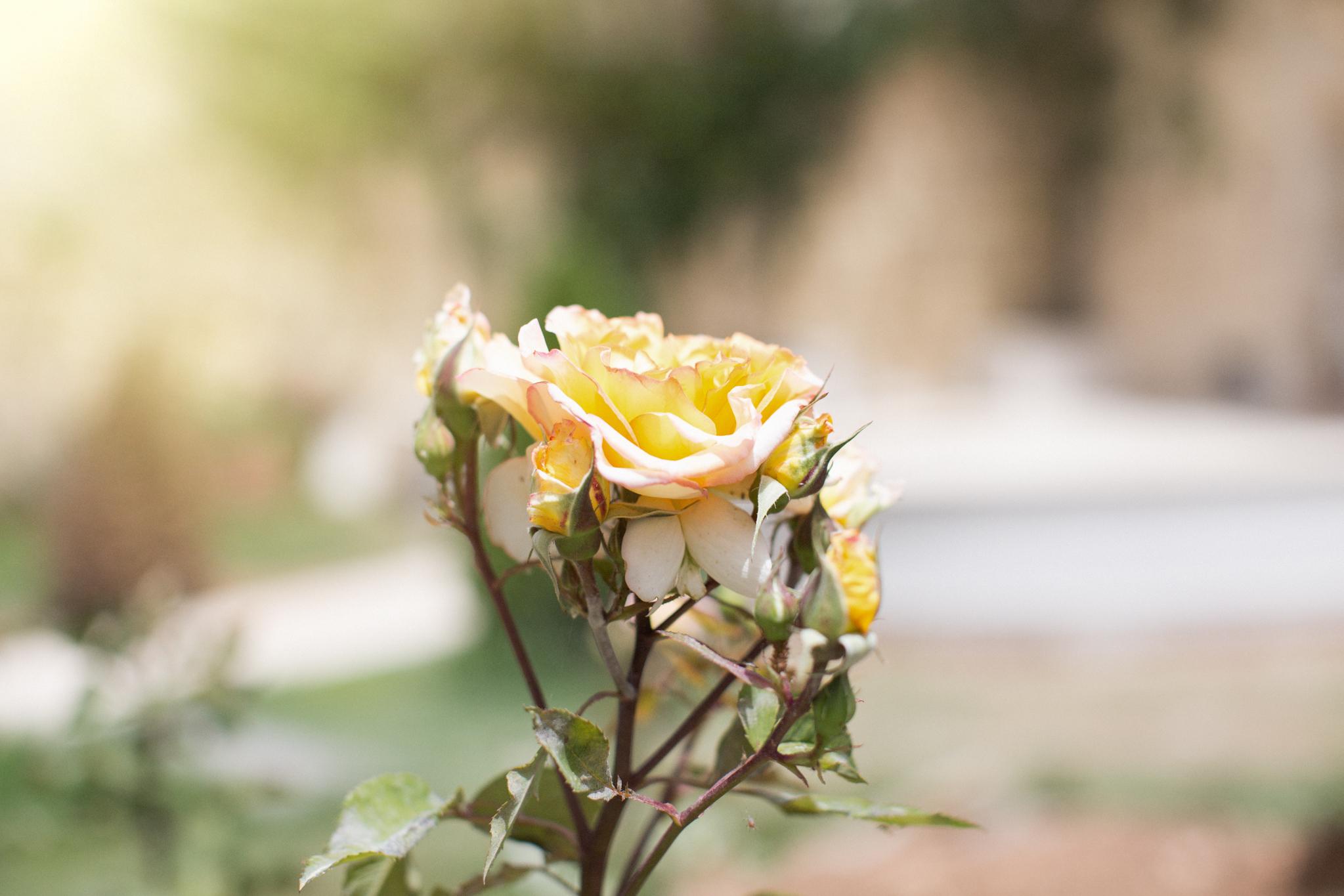 palazzio parisio, malta breakfast, best breakfast, high end, family photographer malta, svensk i malta, gardens of malta, historic architecture naxxar