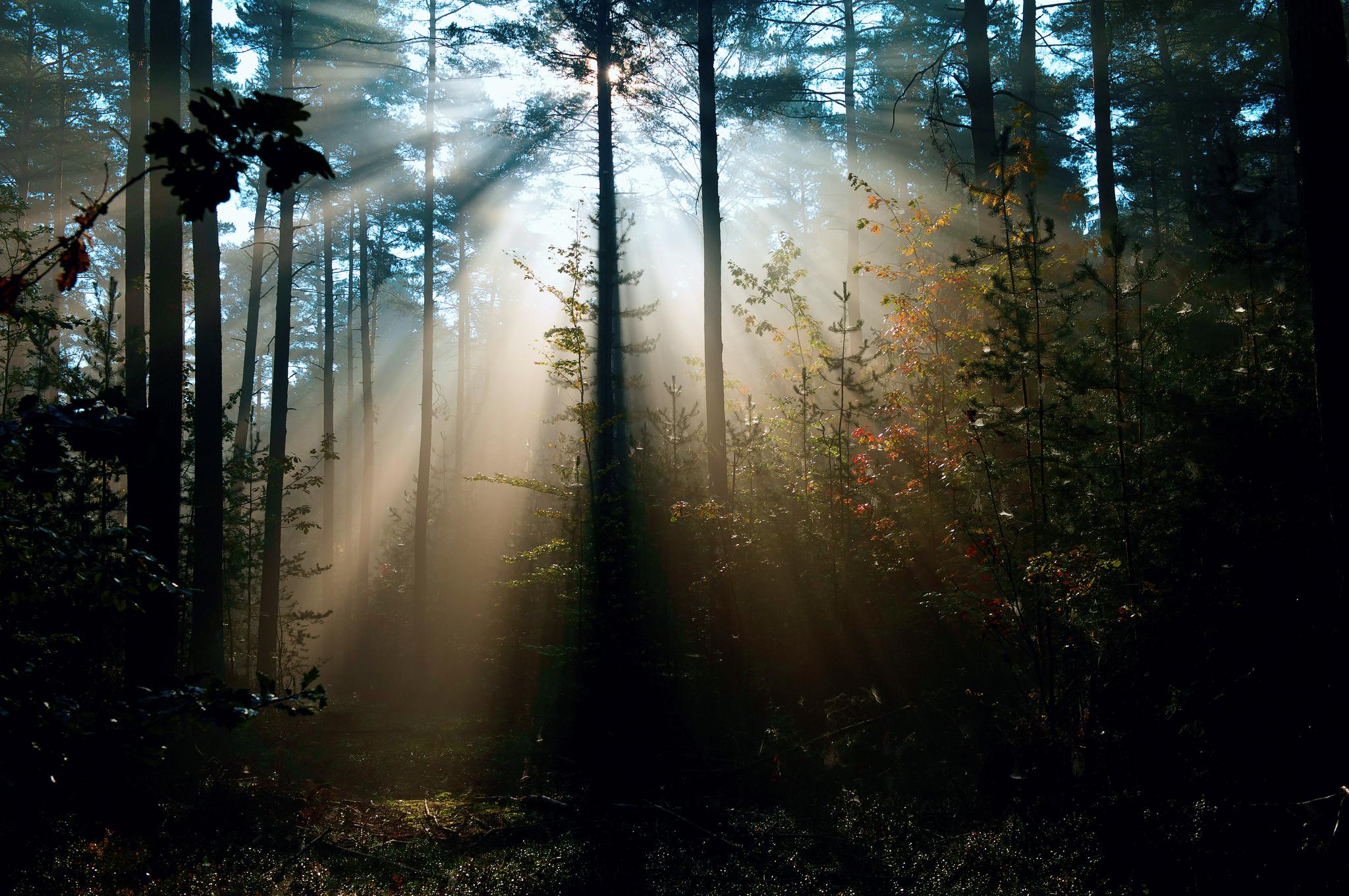 Nature Sunlight in Trees.jpg