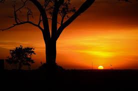 Mature Sunset Scene.jpeg
