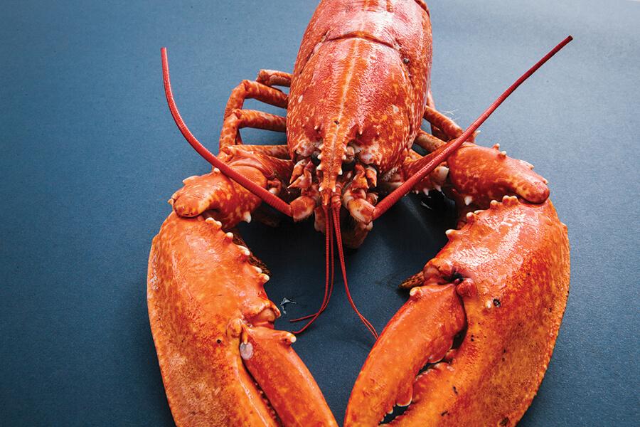 Lobster_4.jpg