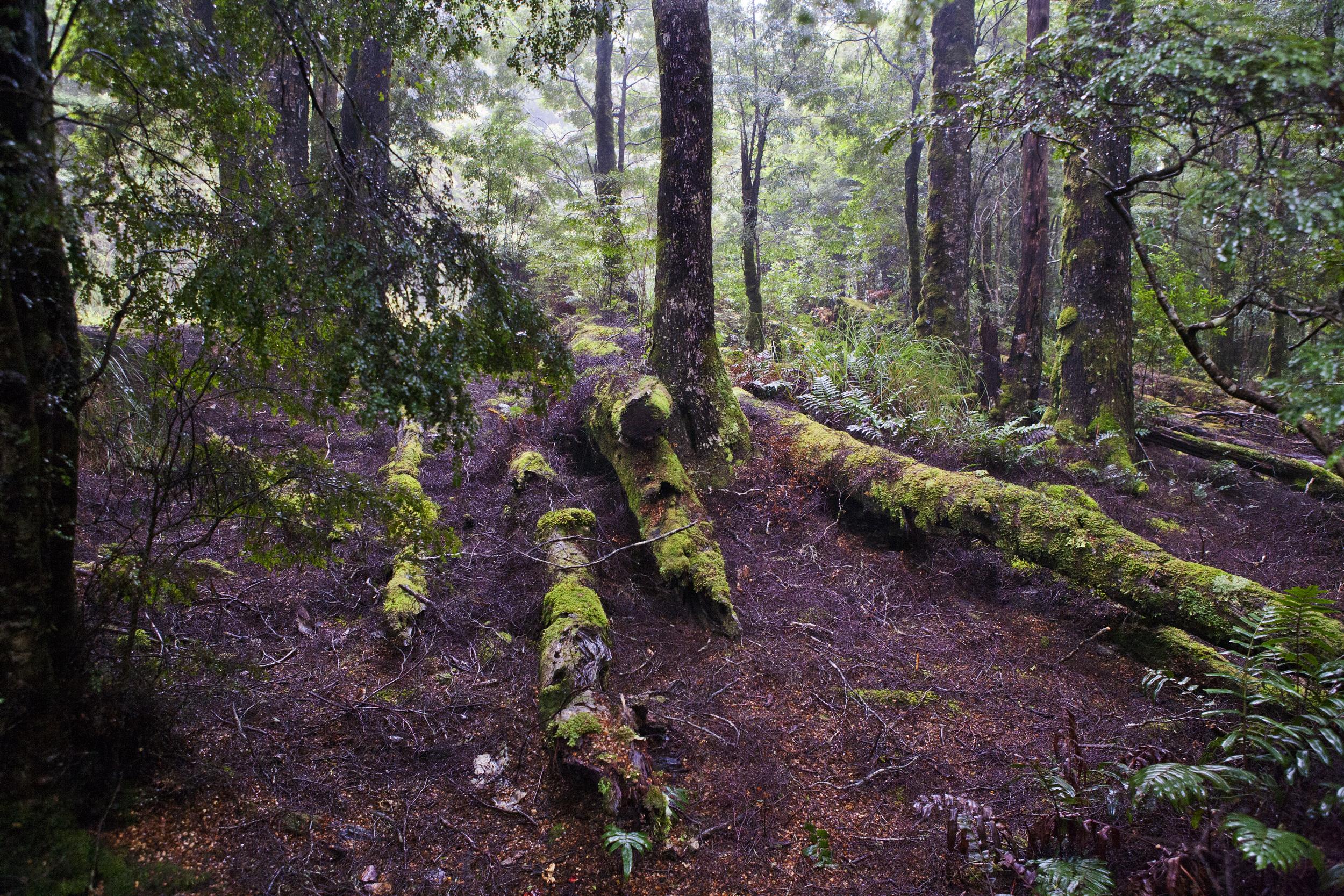 Forest Floor Tazmania