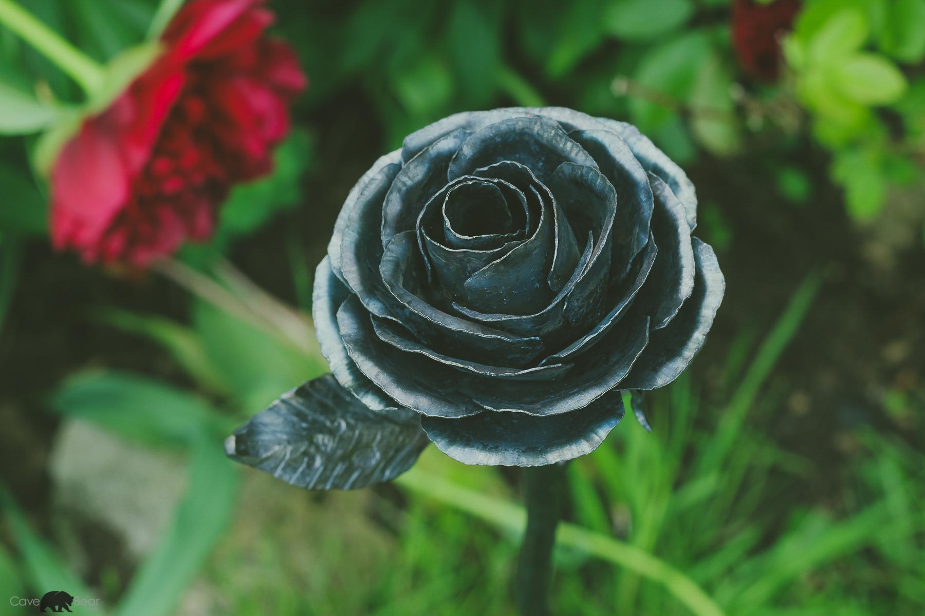 Rose close up.jpg