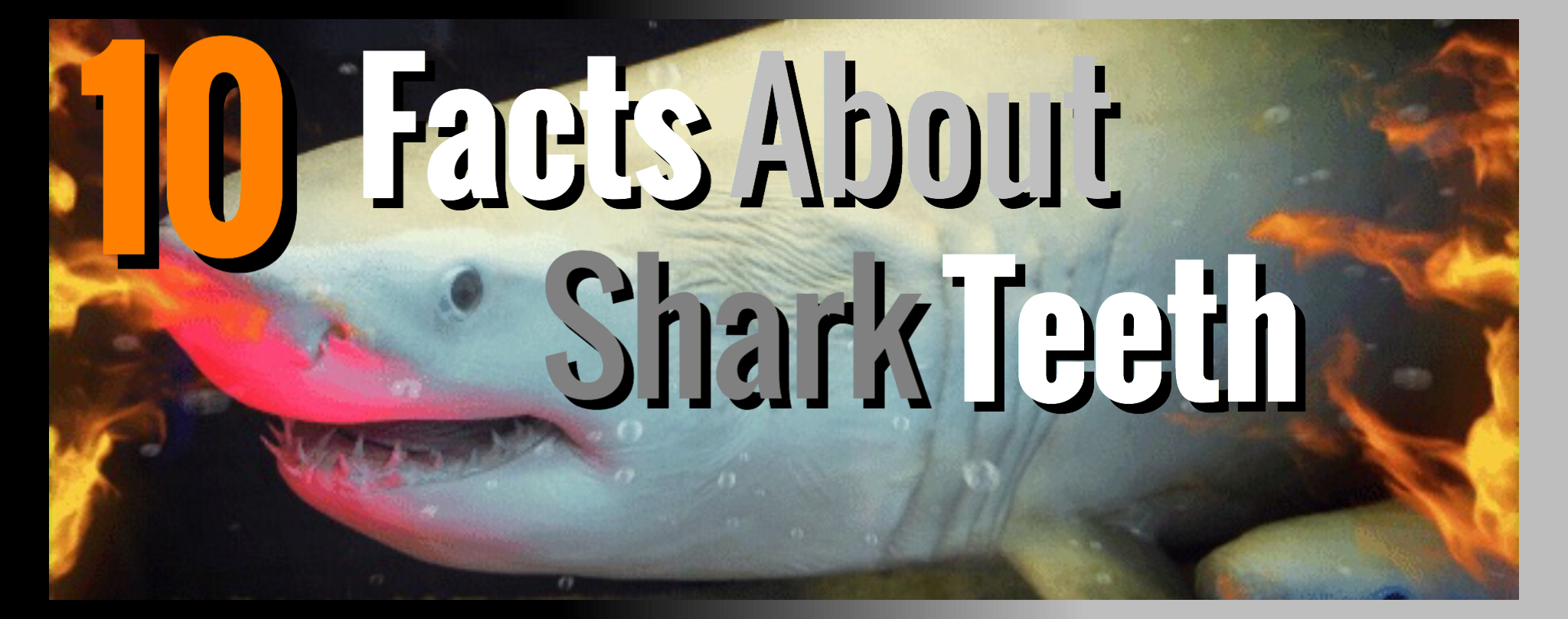 shark-facts-thumbnail.JPG