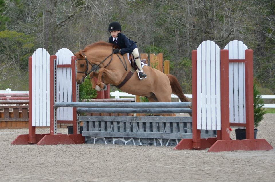 Clifford - SOLD   Clifford is a 12yo Welsh X medium pony. Cliff has numerous championships to his name from Medium Pony Hunters to Mini Stirrup. Cliff does it all. He is a good mover, GREAT jumper, and has a beautiful conformation. Cliff is safe for kids and takes a bit of leg to get going.