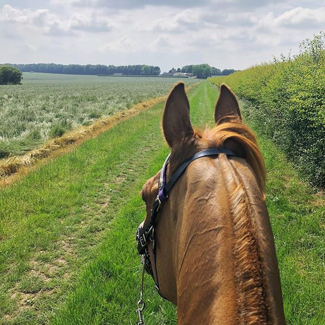 Someone's spied the venue 🐴☀️ @ Three Rivers #enduranceride #80kmCER #betweentheears