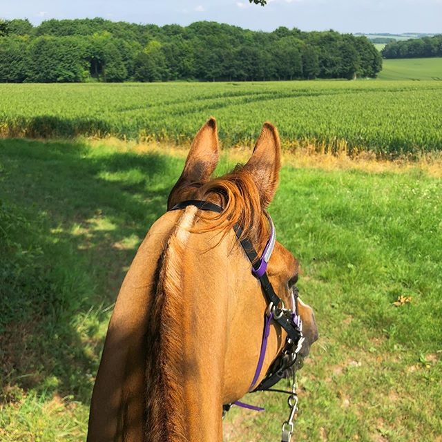 Took it steadier on the last loop, getting to enjoy the sights even more (can you tell he loves rides?) #80kmCER #enduranceriding