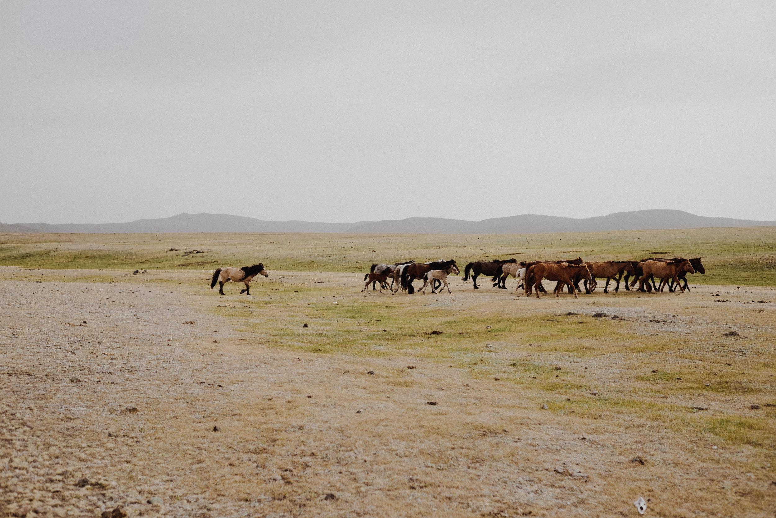 MongoliaTrek2018-8249.jpg
