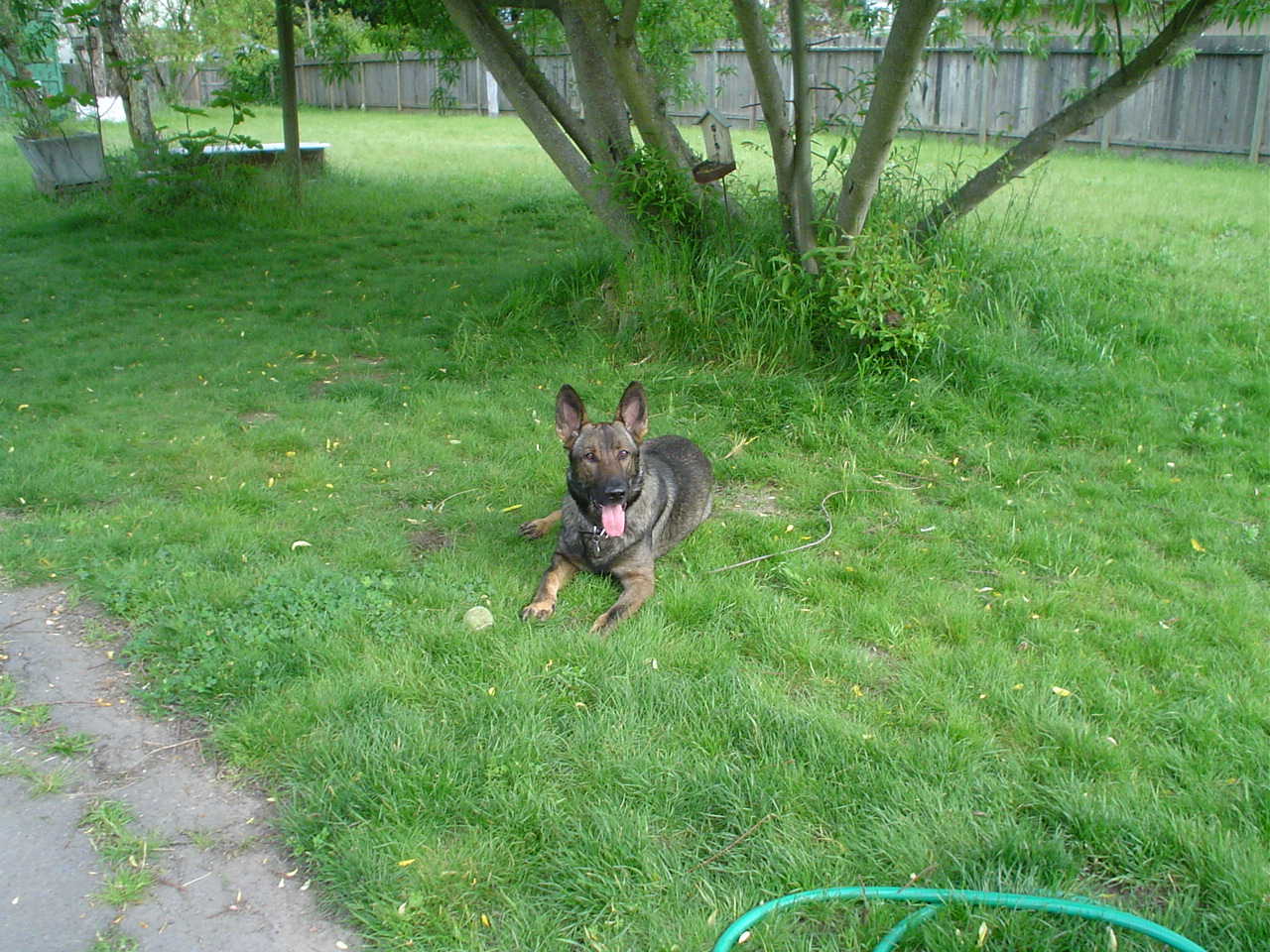 Dante, taken April 20,2011 Passed Sept 29, 2011. Memorial post on my blog.