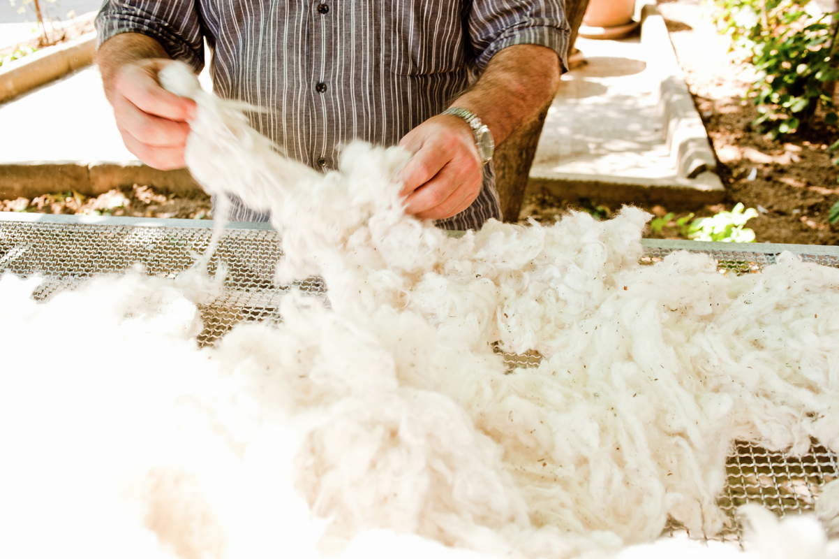 A farmer inspecting the harvested cotton.
