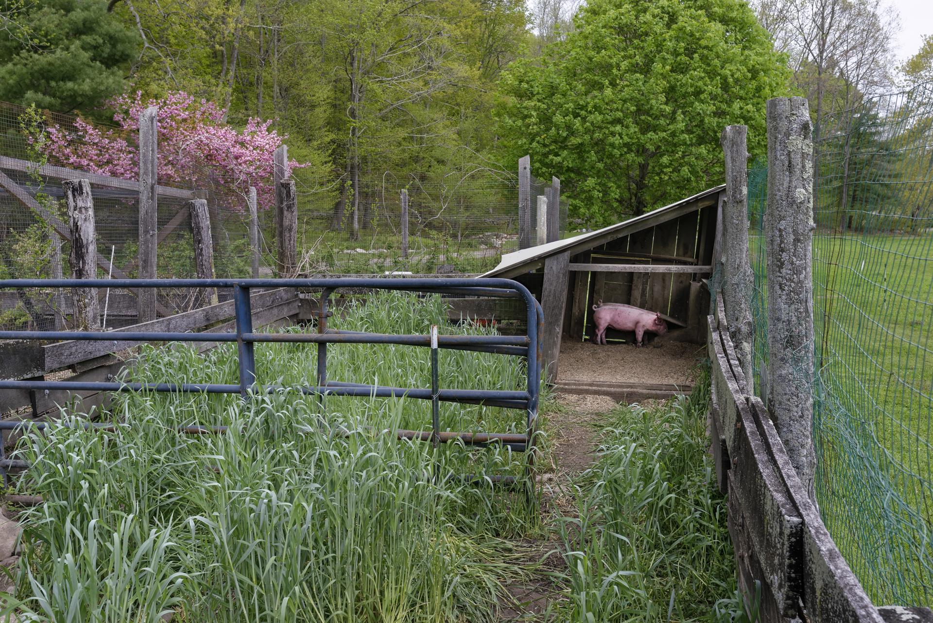 New Pond Farm - Bill Gore.jpg