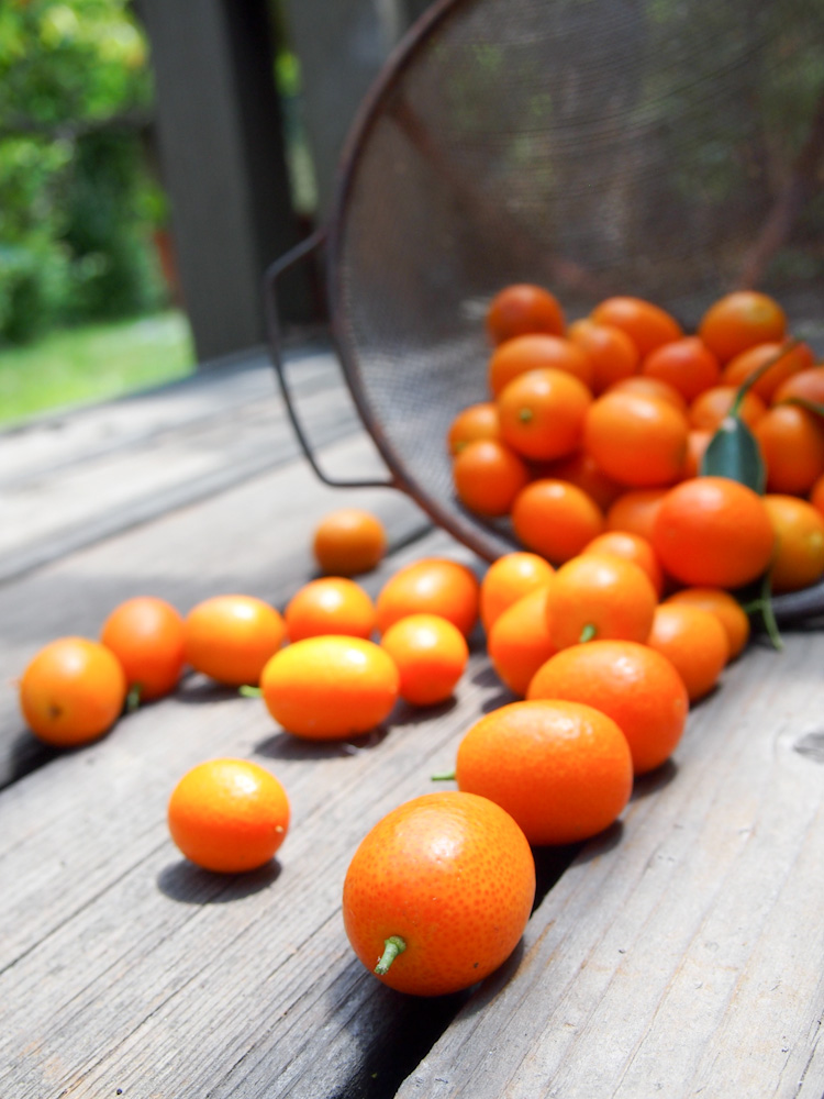 Salted Kumquats and Kumquat Honey Tea | vermilionroots.com. An easy and delicious remedy for sore throats.