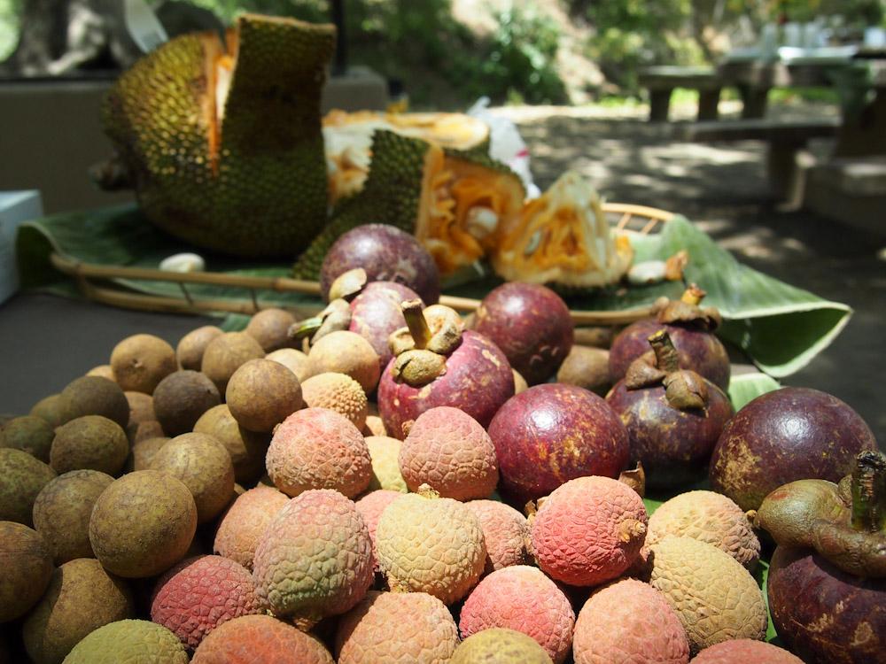 tropical fruits: lychee, longan, mangosteen and jackfruit