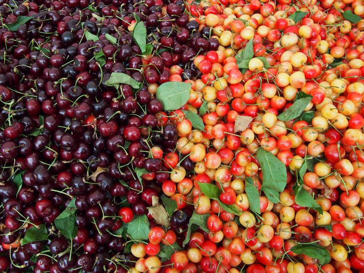 cherry season is one of the most beautiful sights to experience at the farmers markets