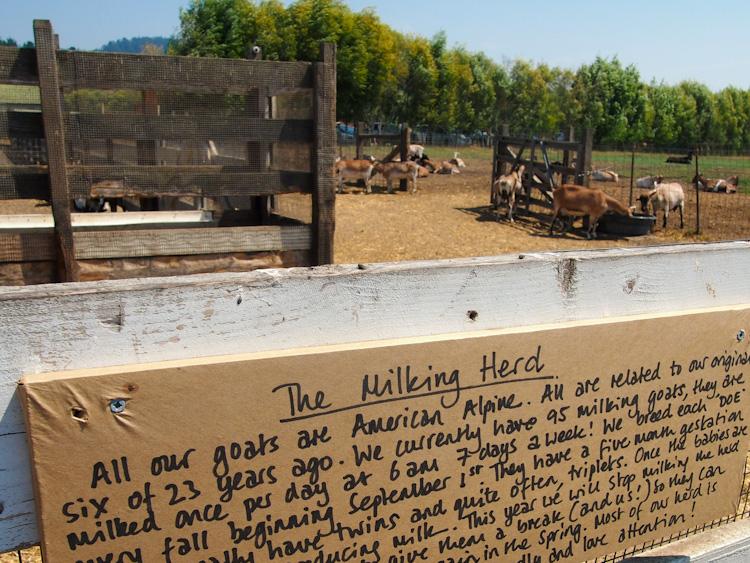 Harley Farms in Pescadero, California   vermilionroots.com