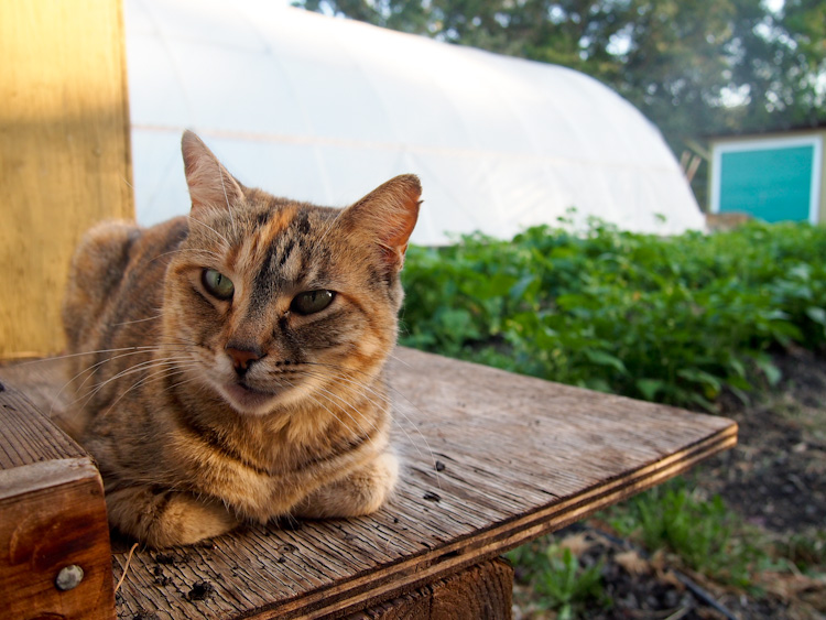 Cat at WWOOF USA One Acre Farm | vermilionroots.com