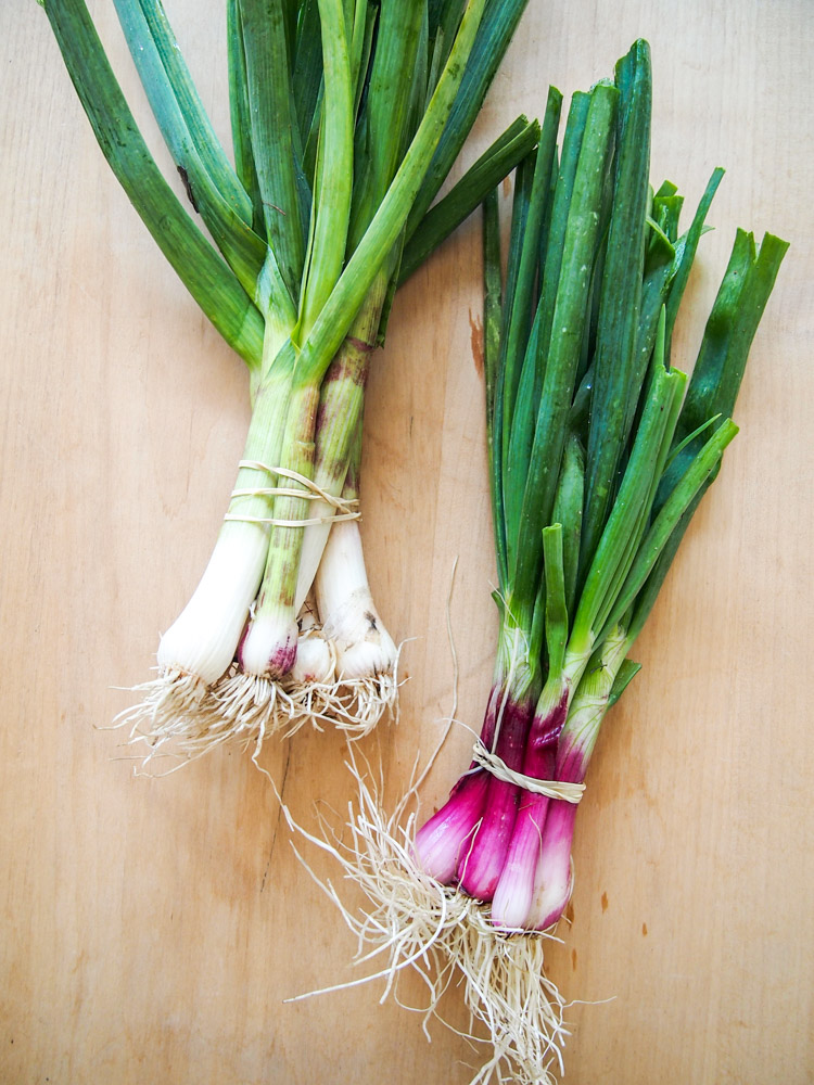 How to tell green garlic and spring onion apart