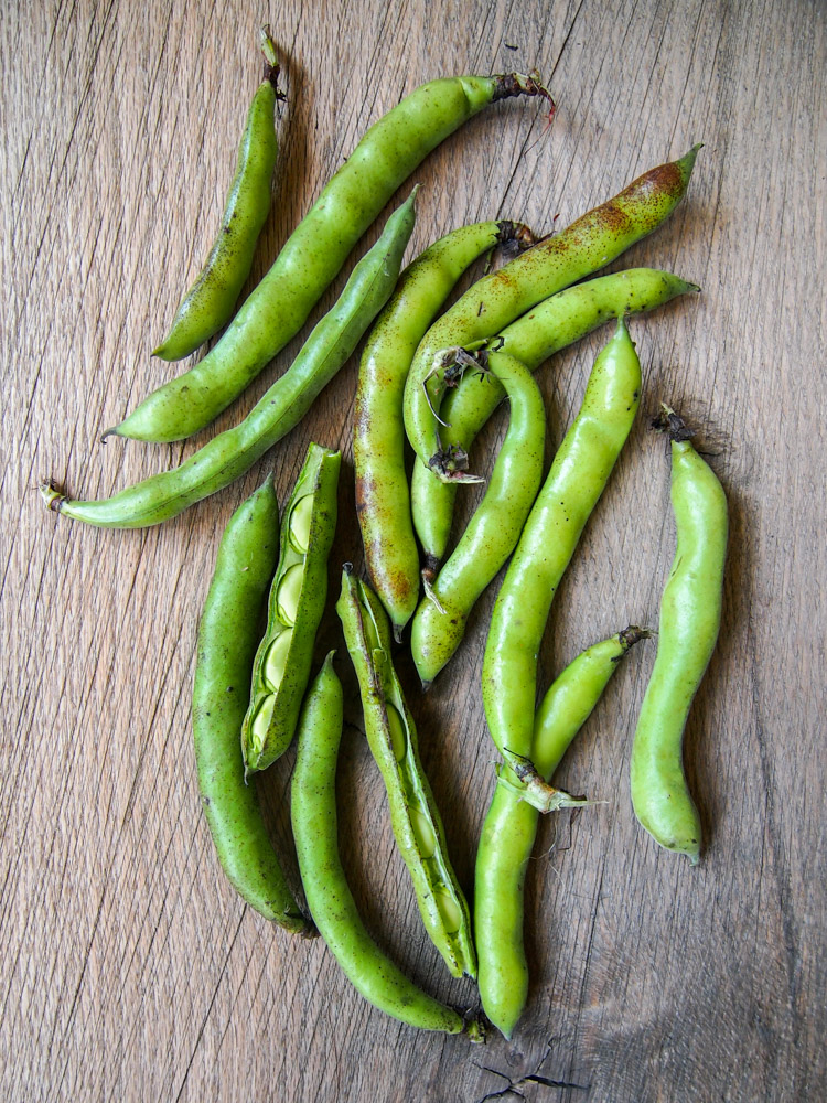 Spring Discovery: How to Cook the Season's Best on VermilionRoots.com. Featured vegetable of the week: fava beans.