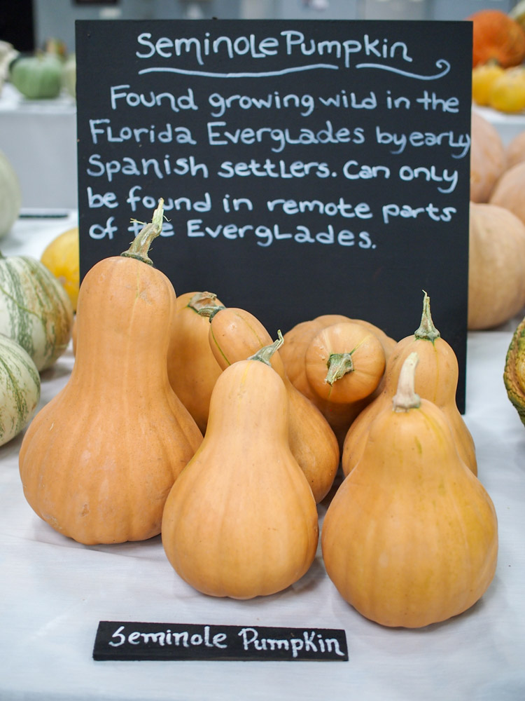 seminole-pumpkin.jpg