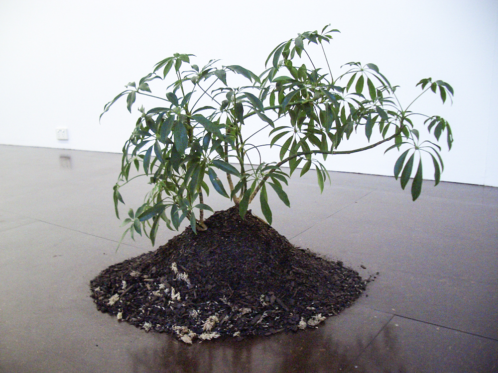 Mikala Dwyer, Only One and a Bit Days to Go, 2005, Darren Knight Gallery, Sydney