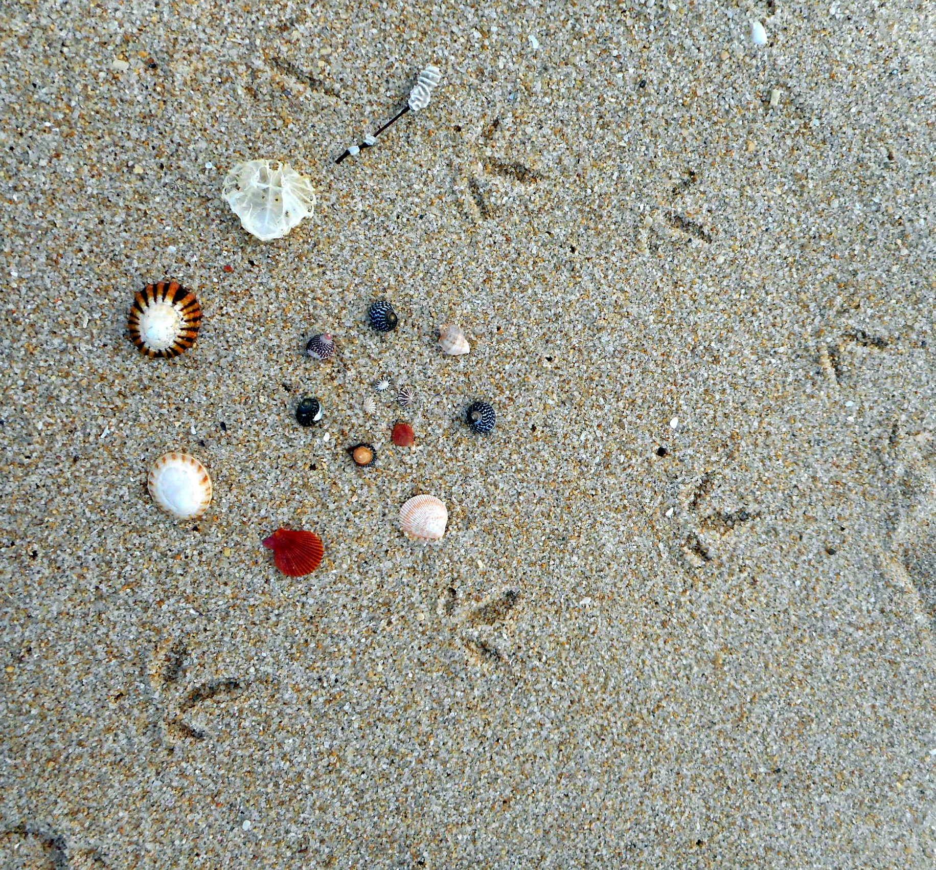 Flinders Island beach