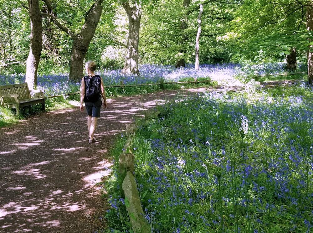 Bluebells at Kew Gardens