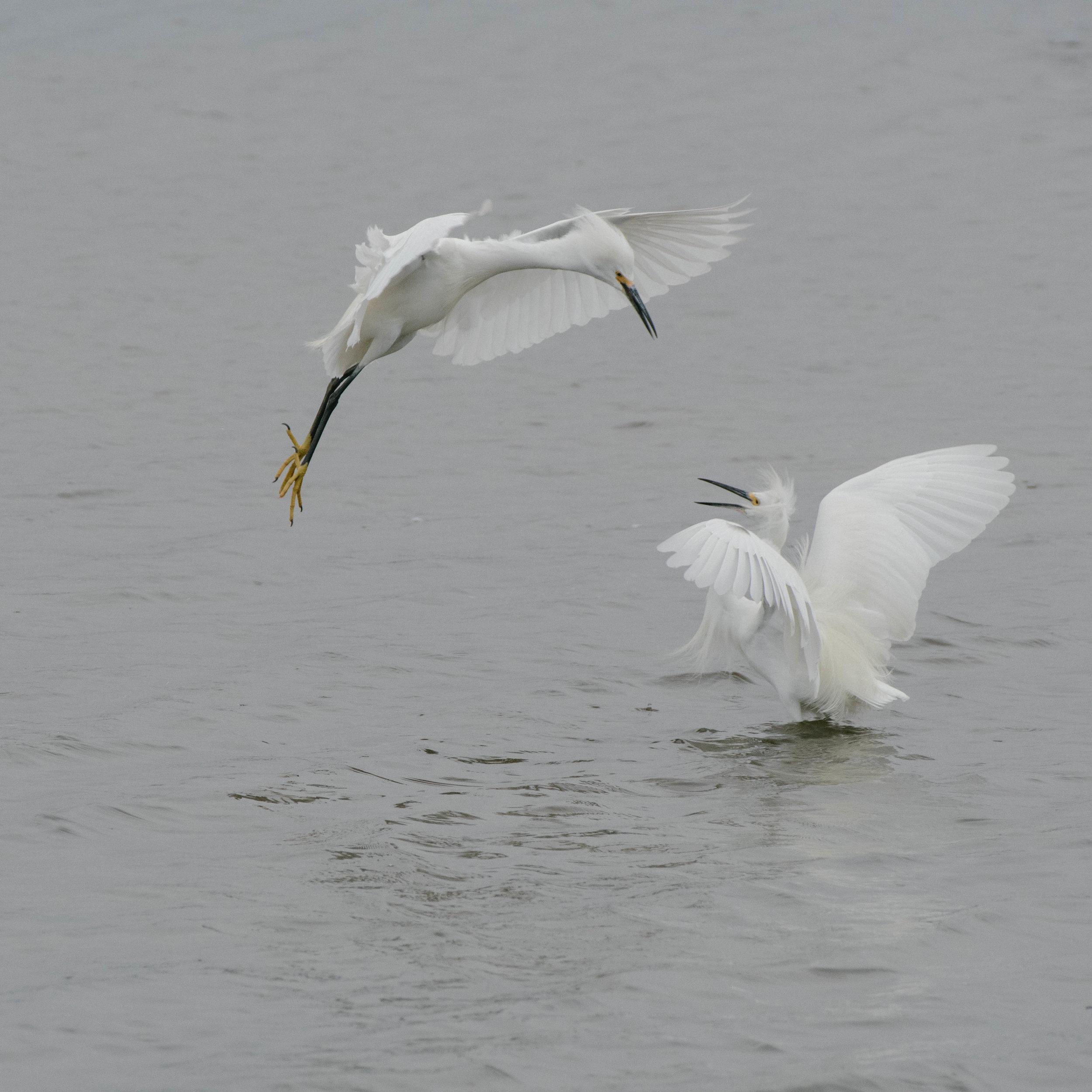Aerial Dual
