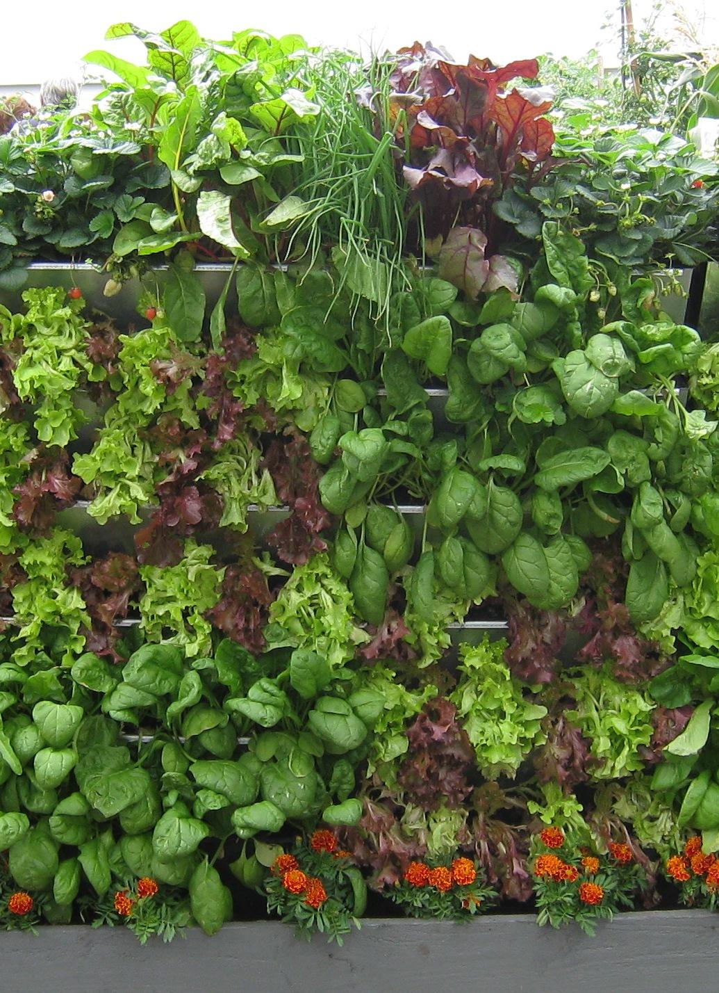 vertical garden veggiecrop