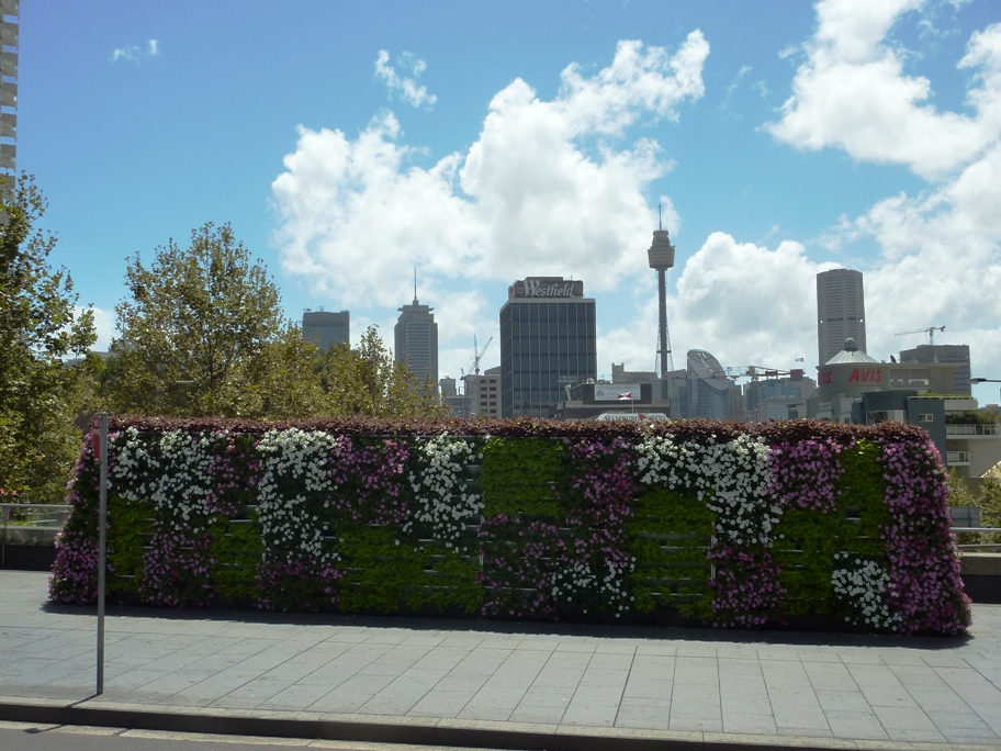 vertical garden - greenwall