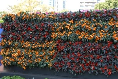 vertical garden DIY kit - Mobiwall
