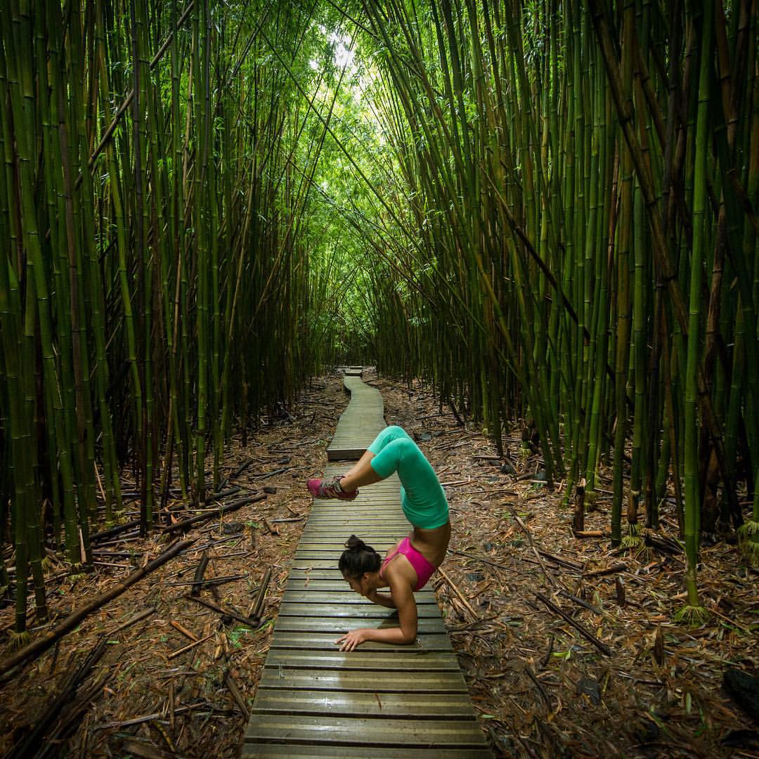 A forest of bamboo