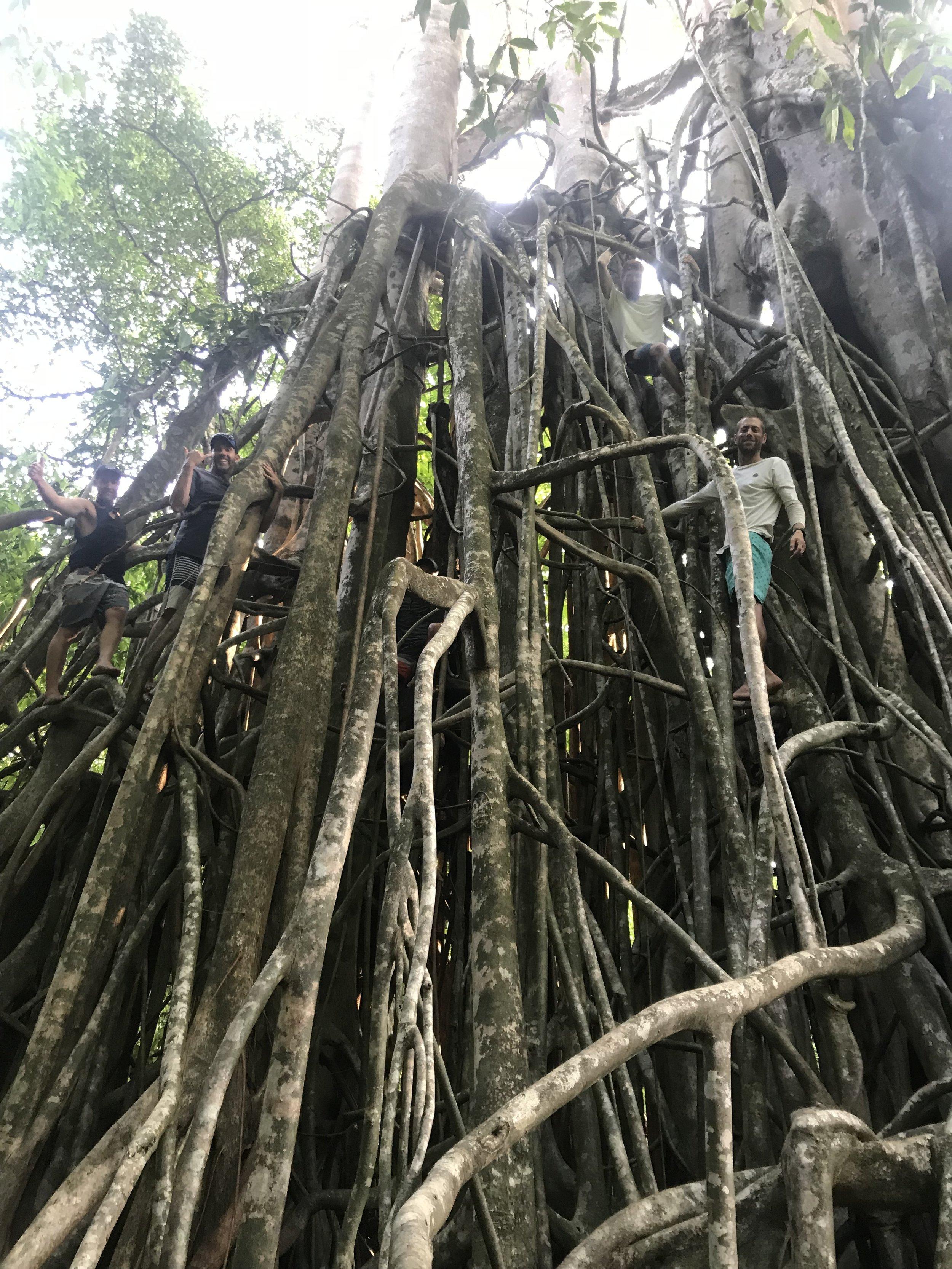 12 Climbing Tree 2.JPG