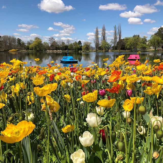 A picture perfect Canberra spring day for our annual Vision Women outing to Floriade. #floriade2019 #valuedandflourishing