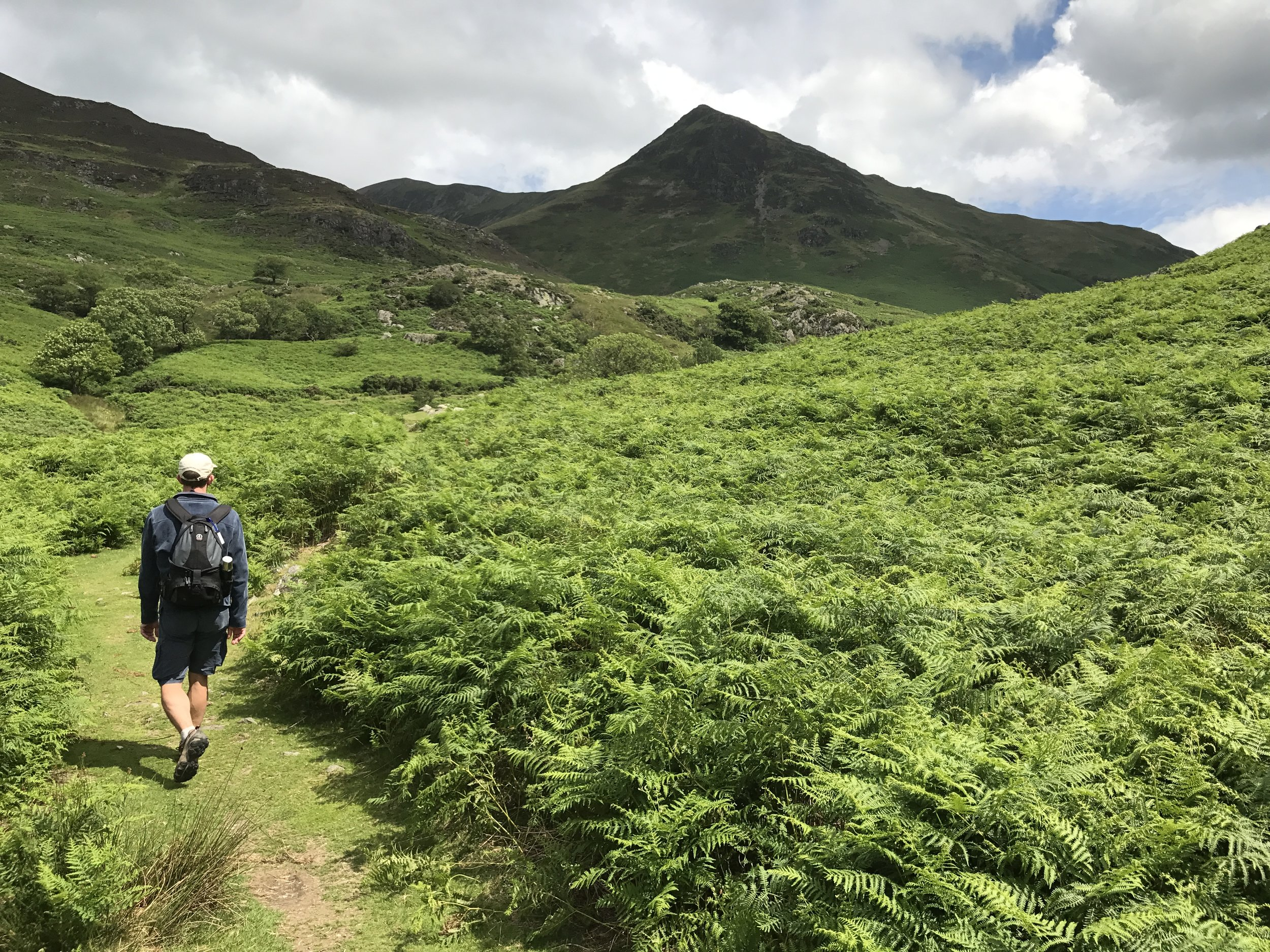 """Tim at Rannerdale. He is over 6'3"""" so you can gauge the bracken"""